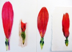 4 versions of flower parts