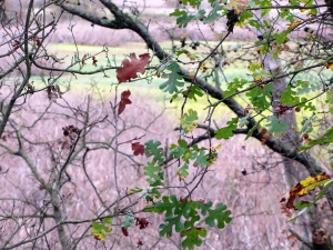 leaves 12 14