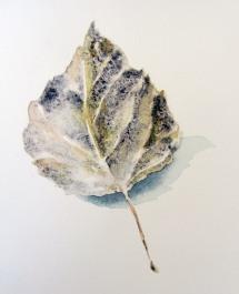 1 8 15 leaf