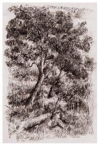4 5 15 tree