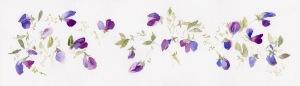 blue violet sweet peas