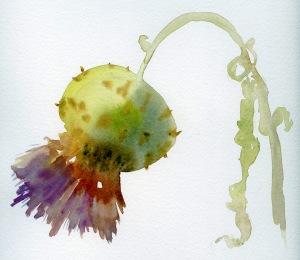 artichoke flower 2 715122