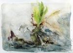 root plant3081